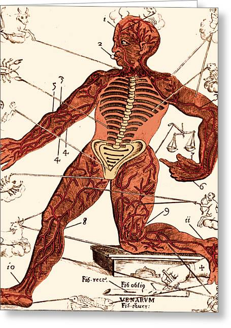 1690 Greeting Cards - Vein Man Medical Astrology 17th Greeting Card by Science Source
