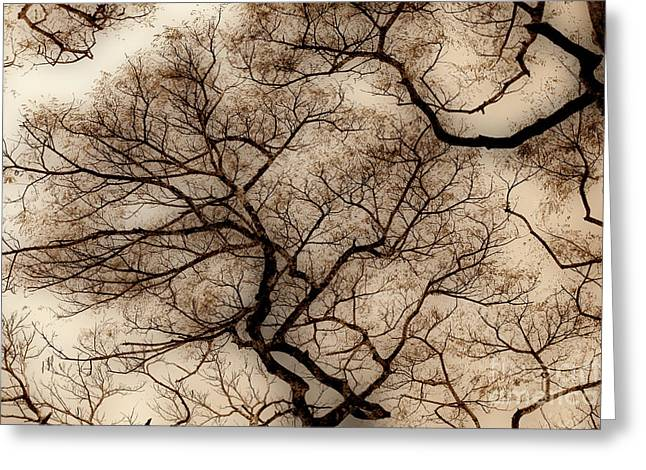 Peaceful Images Greeting Cards - Veins in The Sky Greeting Card by Cheryl Young