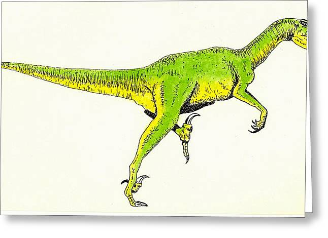 Dinosaurs Drawings Greeting Cards - Velociraptor Greeting Card by Michael Vigliotti