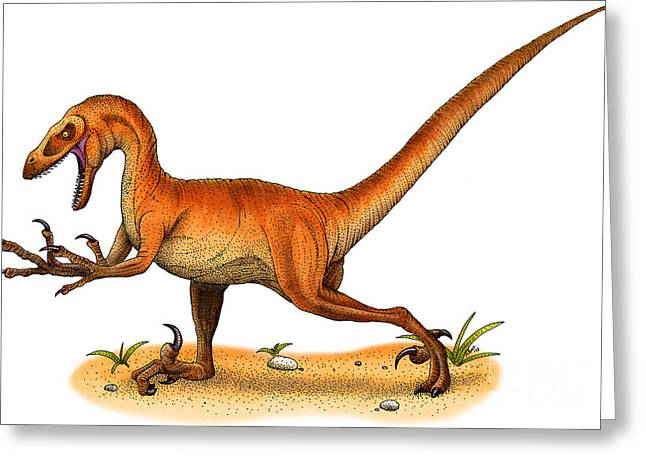 Velociraptor Greeting Cards - Velociraptor Greeting Card by Roger Hall and Photo Researchers