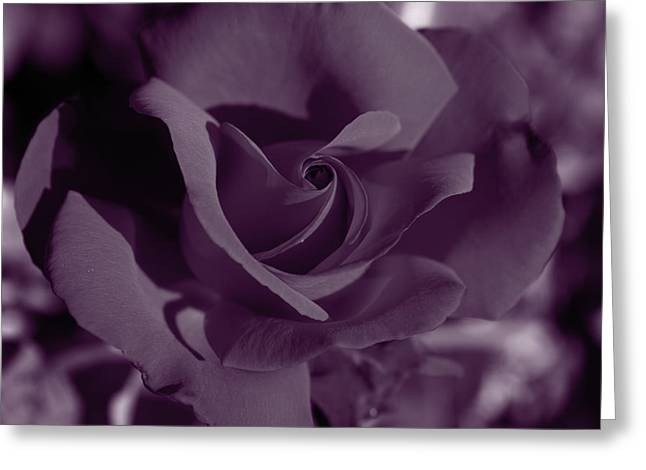 Velvet Rose Greeting Card by Aidan Moran