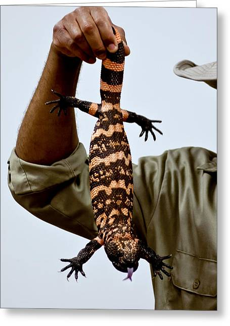 Nature Center Pond Greeting Cards - Venomous lizard aka Gila Monster Greeting Card by LeeAnn McLaneGoetz McLaneGoetzStudioLLCcom