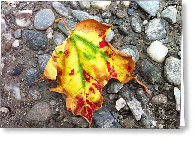 Vermont Foliage - Leaf On Earth Greeting Card by Elijah Brook