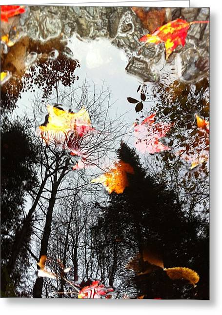 Photographs Greeting Cards - Vermont Leaf and Water Submerged Above Greeting Card by Elijah Brook