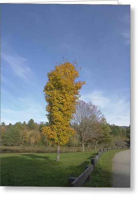 Vermont Lonesome Tree Greeting Card by Elijah Brook