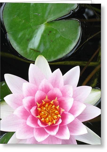 Debbie Finley Greeting Cards - Vertical Water Lily Greeting Card by Debbie Finley