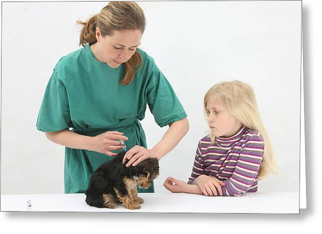 Vaccination Greeting Cards - Vet Giving Pup Its Primary Vaccination Greeting Card by Mark Taylor