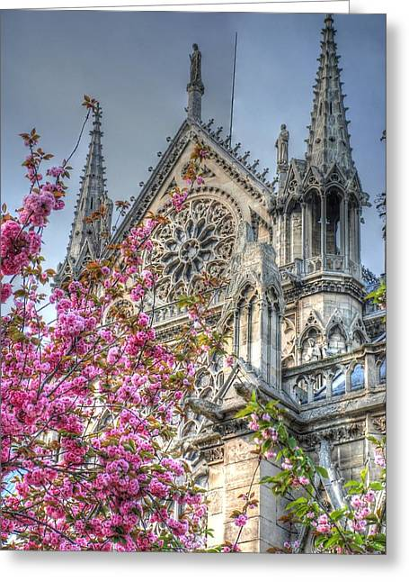 Pink Flower Greeting Cards - Vibrant Cathedral Greeting Card by Jennifer Lyon