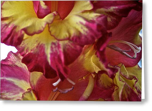Vibrant Gladiolus Greeting Card by Susan Herber