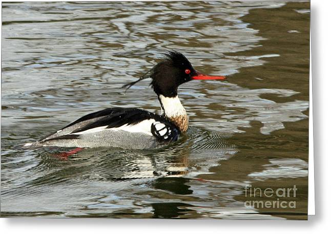 Vibrant Red Breasted Merganser At The Lake Greeting Card by Inspired Nature Photography Fine Art Photography