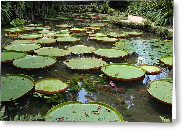 Emilio Greeting Cards - Victoria amazonica 01 Greeting Card by Nelson Caramico
