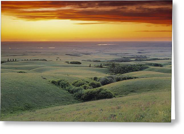 Cypress Hills Greeting Cards - View From The Cypress Hills Greeting Card by Darwin Wiggett