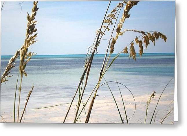 Coco Cay Greeting Cards - View from the grass Greeting Card by Alexis Lape