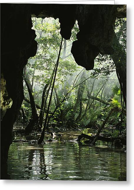 View From The Mouth Of Mil Columnas Greeting Card by Bill Hatcher