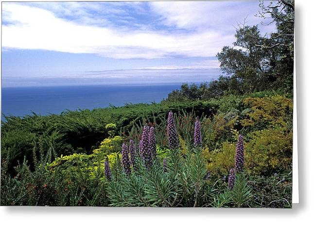 Flowers Framed Prints Greeting Cards - View from Ventana Big Sur Greeting Card by Kathy Yates