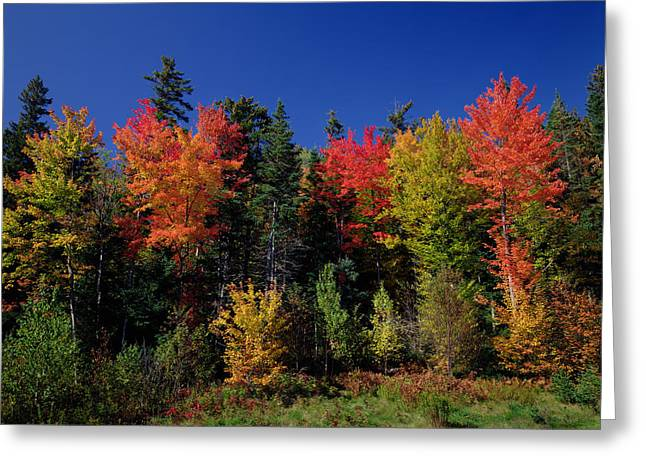 Leaf Change Greeting Cards - View in the Appalachian Mountains Greeting Card by View in the Appalachian Mountains