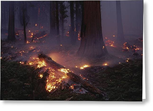 View Of A Controlled Fire In A Stand Greeting Card by Raymond Gehman
