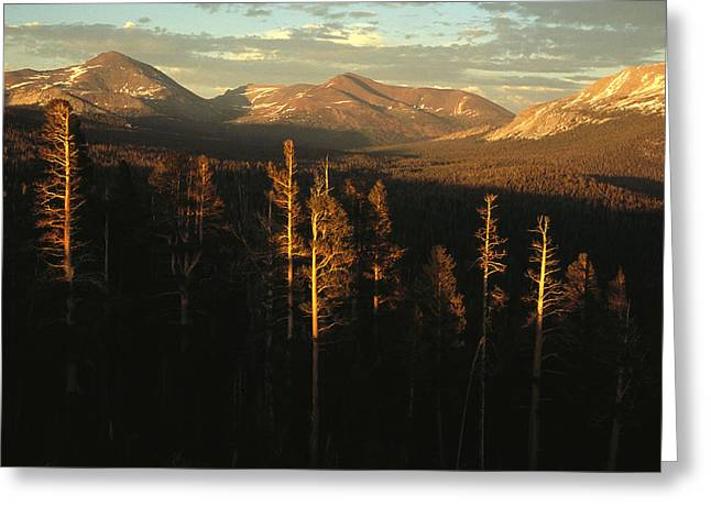Park Scene Greeting Cards - View Of A Range Of The Sierra Nevada Greeting Card by Phil Schermeister