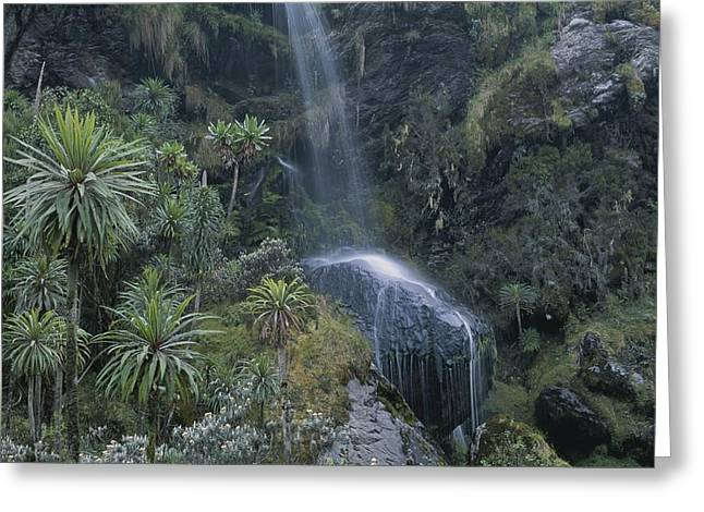 Forests And Forestry Greeting Cards - View Of A Waterfall Greeting Card by Carsten Peter