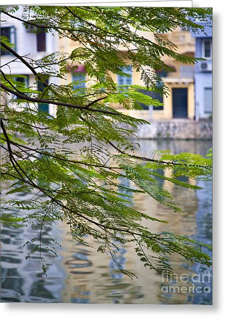 Bough Greeting Cards - View of Buildings and Water through Tree Branches Greeting Card by David Buffington
