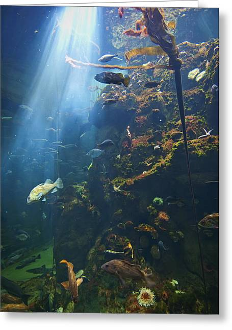 View Of Fish In An Aquarium In The San Greeting Card by Laura Ciapponi