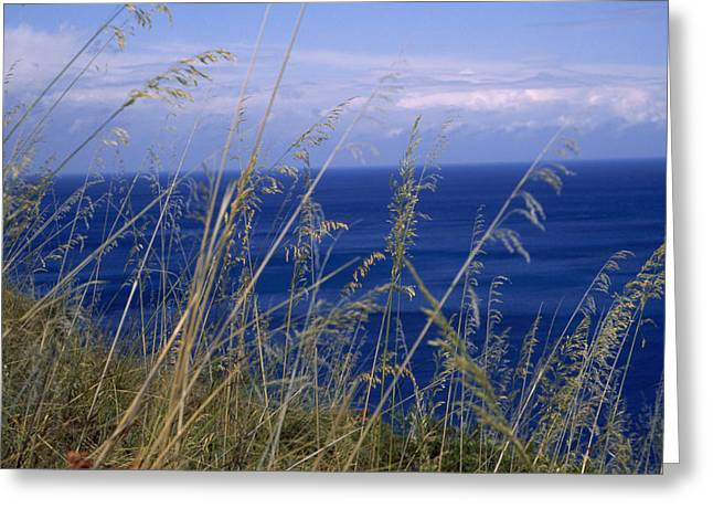 Greeting Cards - View Of The Sea Through Grasses Atop Greeting Card by Marcia Kebbon