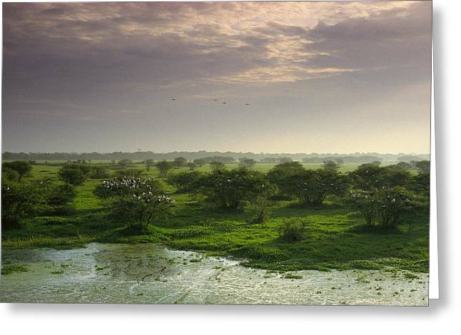 Bird Rookery Swamp Greeting Cards - View Of Wetland Landscape With Openbill Greeting Card by James P. Blair