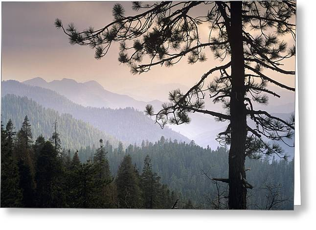 Kings Canyon National Park Greeting Cards - View Over Foothills To The West Greeting Card by Tim Fitzharris