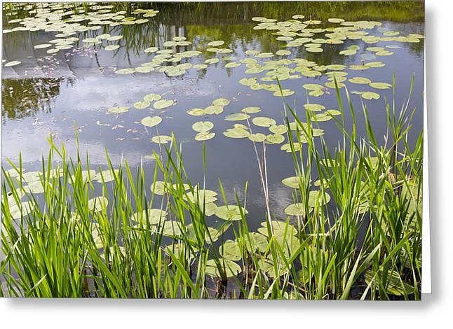 Green Day Greeting Cards - Village Pond Greeting Card by Aleksandr Volkov