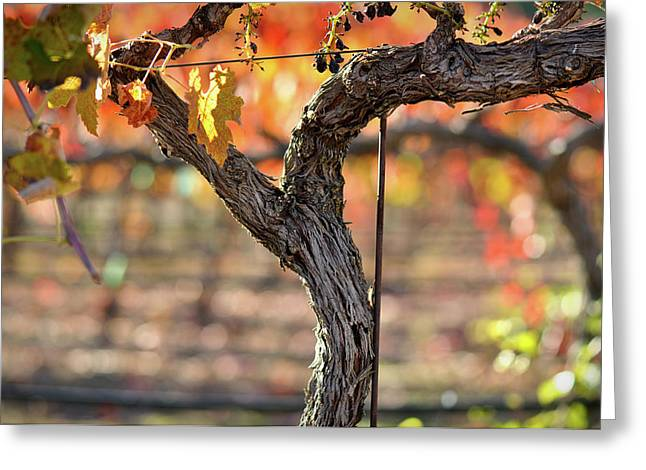 Grapevine Autumn Leaf Greeting Cards - Vine Greeting Card by Brandon Bourdages