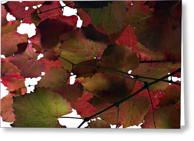 Vine Leaves Greeting Card by Douglas Barnard