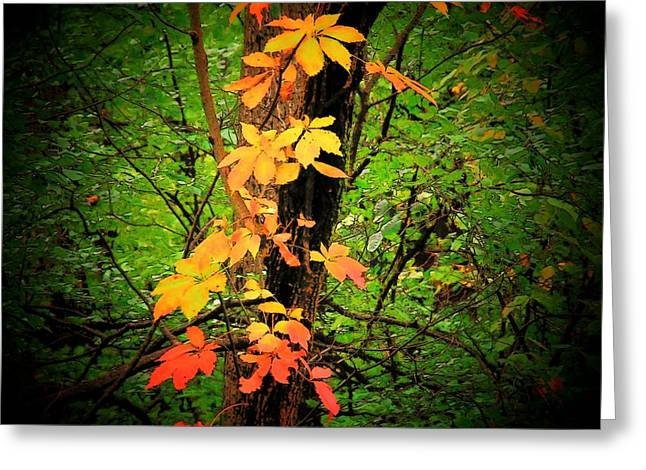 Vine Leaves Photographs Greeting Cards - Vine Greeting Card by Michael L Kimble