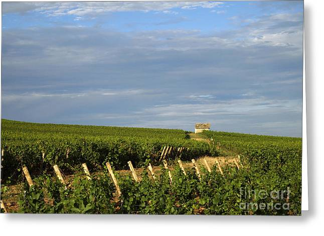 Growth Greeting Cards - Vines in Burgundy. France Greeting Card by Bernard Jaubert