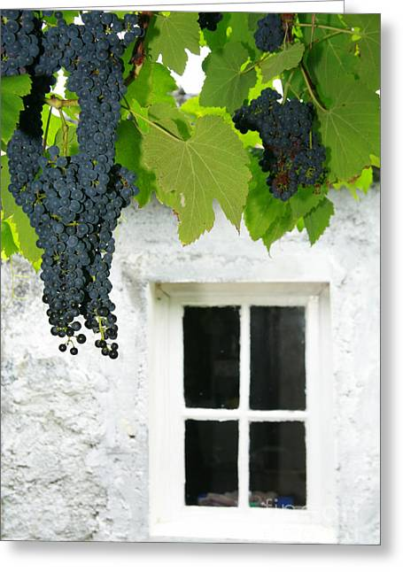 Azoren Greeting Cards - Vines in the backyard Greeting Card by Gaspar Avila