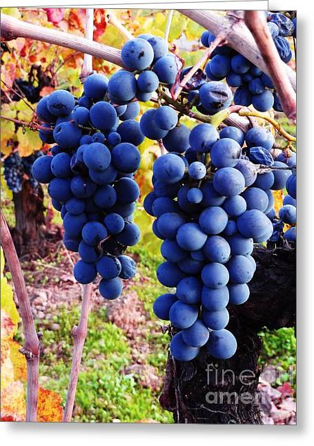 Blue Grapes Greeting Cards - Vineyard 10 Greeting Card by Xueling Zou