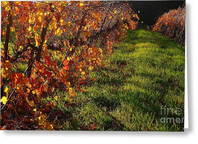 Grapevine Photographs Greeting Cards - Vineyard 13 Greeting Card by Xueling Zou