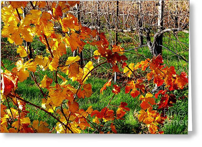 Grapevine Photographs Greeting Cards - Vineyard 17 Greeting Card by Xueling Zou
