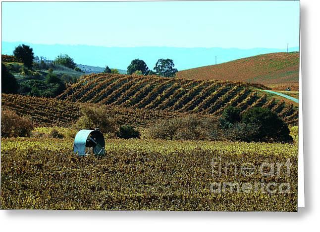 Vintner Greeting Cards - Vineyard 23 Greeting Card by Xueling Zou