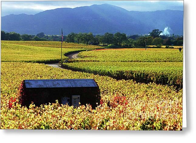 Vintner Greeting Cards - Vineyard 25 Greeting Card by Xueling Zou