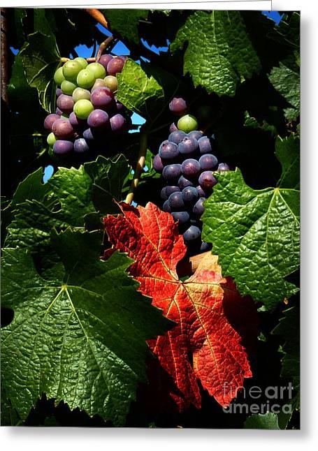 Vintner Greeting Cards - Vineyard 32 Greeting Card by Xueling Zou