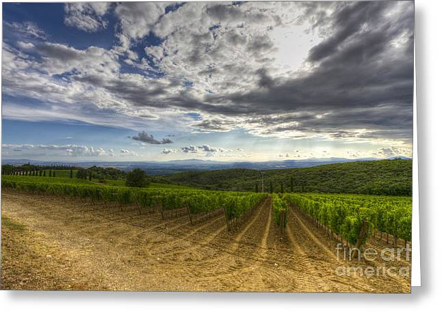 Brunello Greeting Cards - Vineyard Greeting Card by Andreas Jancso