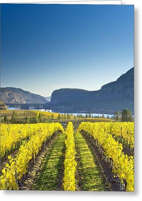 Blue Grapes Greeting Cards - Vineyard, Canada Greeting Card by David Nunuk