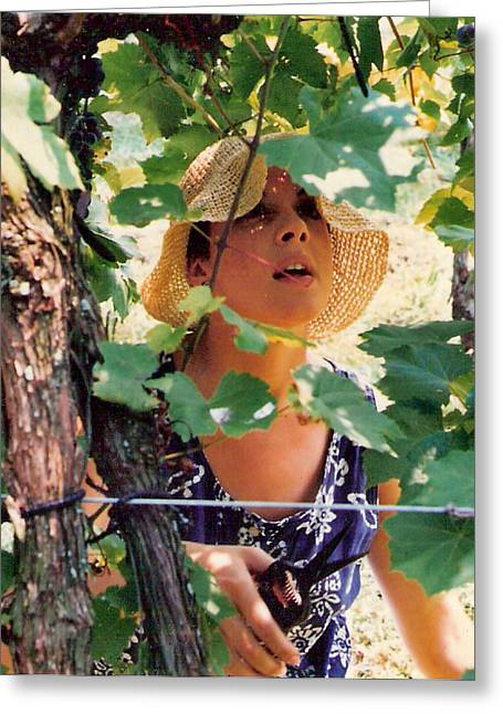 Light-weave Floppy Hat Greeting Cards - Vineyard Harvest Greeting Card by Padre Art