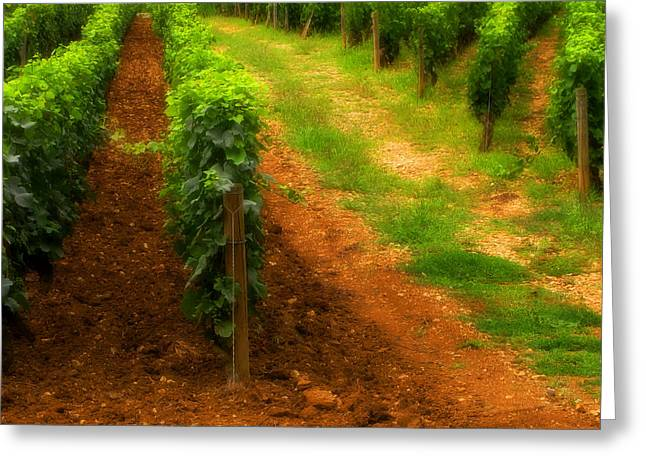 Wine Scene Greeting Cards - Vineyard in Burgundy France Greeting Card by Greg Matchick
