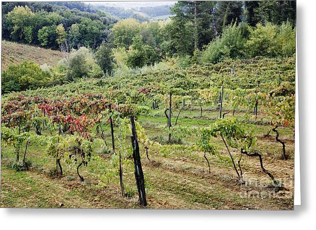 Grapevines Greeting Cards - Vineyard Greeting Card by Jeremy Woodhouse