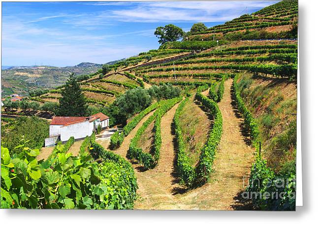 Vineyard Landscape Greeting Card by Carlos Caetano