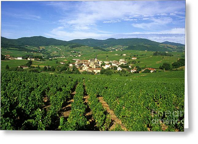 Grape Leaves Greeting Cards - Vineyard of Beaujolais in France Greeting Card by Bernard Jaubert