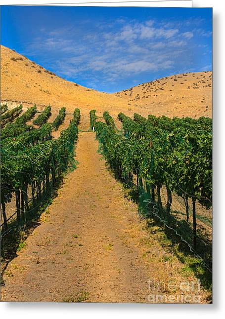 Purple Grapes Greeting Cards - Vineyard Greeting Card by Robert Bales