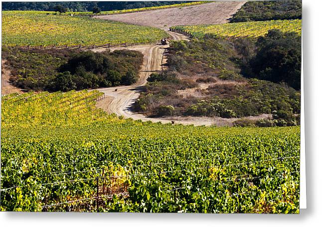 Vineyard Scene Greeting Card by Bernard  Barcos