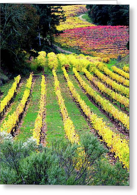 Vineyard Sonoma 7 Greeting Card by Anthony George